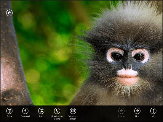 Microsoft Bing Wallpaper Changer