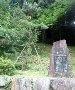 植え替えられた「だじゃの松」。昭和の初め頃までは、子ども2人でやっと抱えらえるほど大きな幹の松が、道路にせり出す形で立っていたという(撮影/編集部・作田裕史)