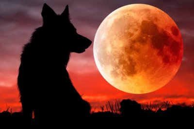 A Great Total Lunar Eclipse Is Coming Soon Super Blood Moon 2019