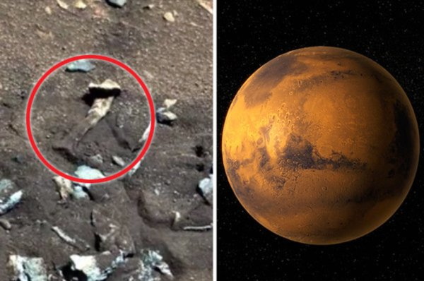 Alien news: NASA told to 'own up' over Mars ...