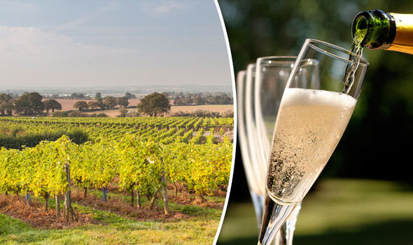 Winemakers plan to protect 'British Fizz'