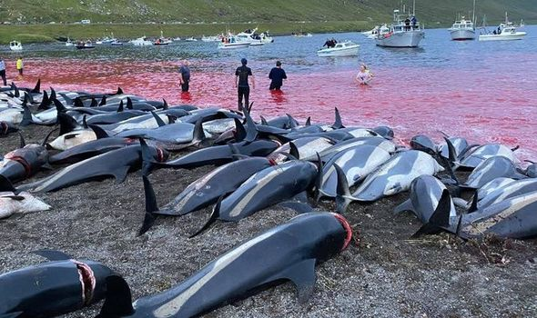 Calls for UK to suspend trade deal with Faroe Islands after dolphin bloodbath