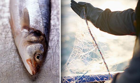 sea bass fishermen