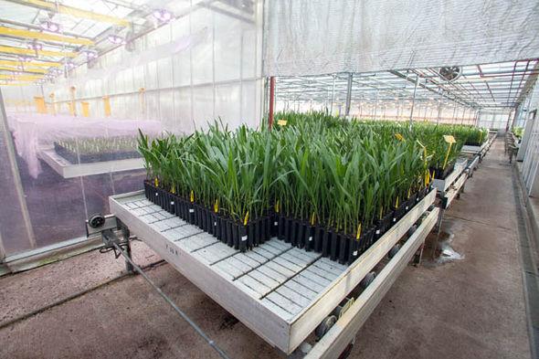 Saplings growing in a greenhouse