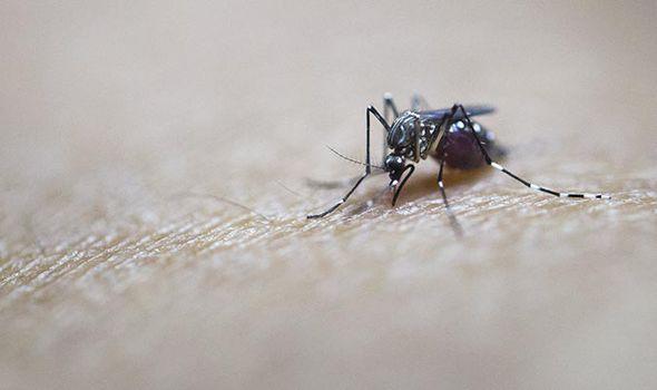 malaria mosquito antibiotics resistant epidemic