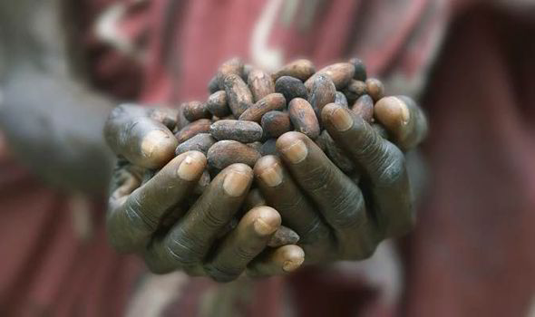 The only country that produces more cocoa beans than Ghana is the Ivory Coast