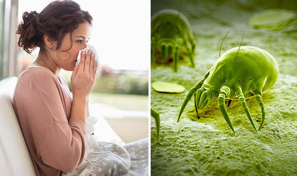 Image result for Dust Mites and other critters on bed sheets