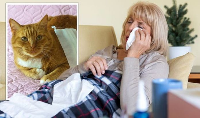 Covid: Pets potentially act as 'viral reservoir' encouraging transmission of disease