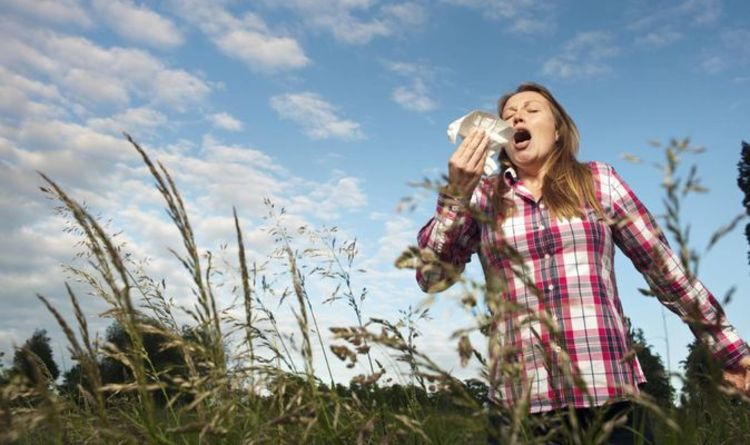 Hay fever remedies - 6 natural hay fever remedies and reliefs to try this summer