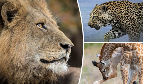 Africa animal pictures Stunning gallery of work by Penny