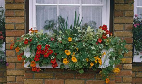 Alan Titchmarsh S Tips On Growing Plants On Balconies Express Co Uk
