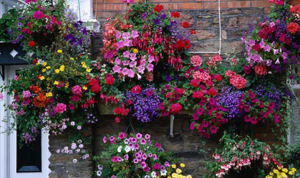 Image result for hanging basket