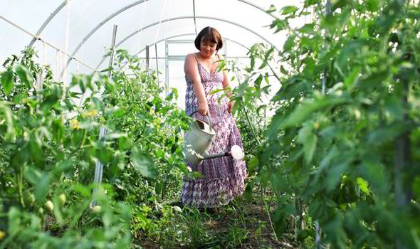 Advice on how to look after your greenhouse this winter