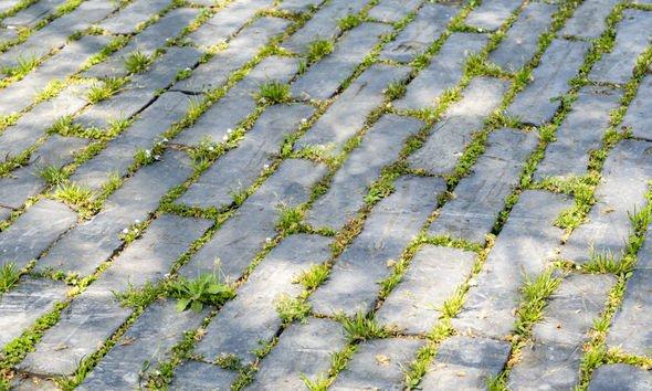 White vinegar weed killer: Weeds on driveway