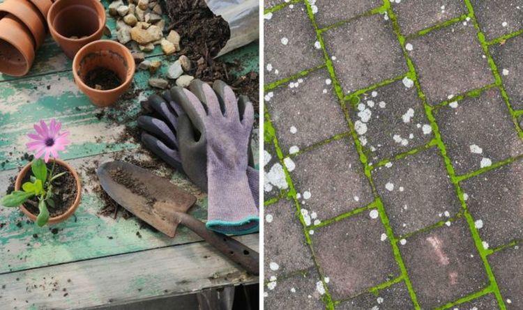 get rid of moss in your garden