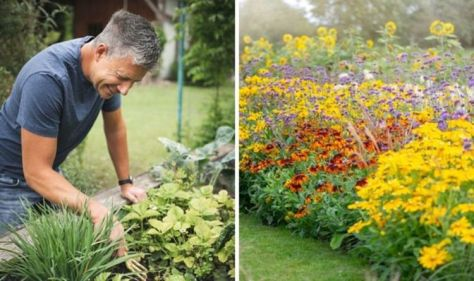 When to plant out bedding plants - the 7 plants suitable for bedding