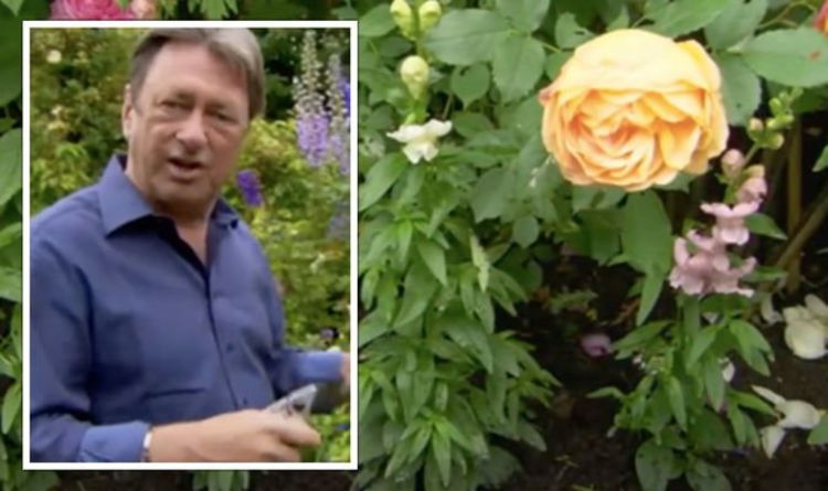 Alan Titchmarsh explains how to avoid 'mildew and black spot' on your roses