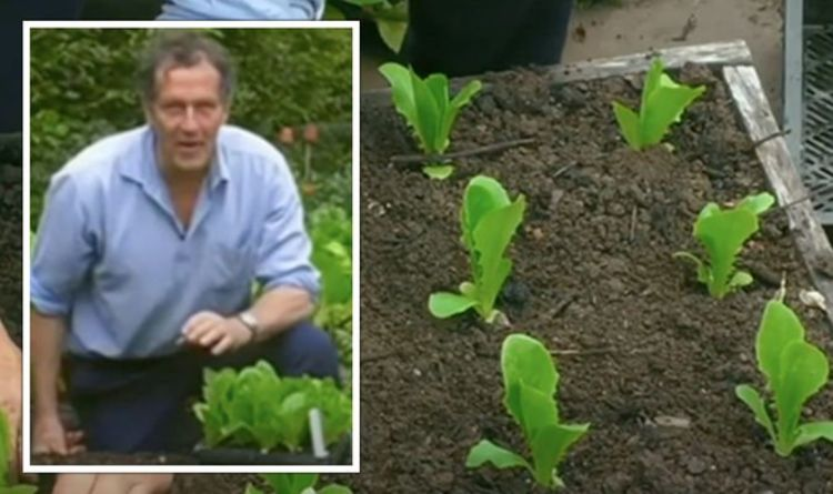 Monty Don shares how to avoid slugs and snails 'devastating' lettuce crops