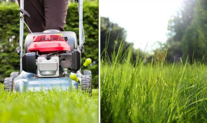 Why you shouldn't mow the lawn in May - What No Mow May is all about