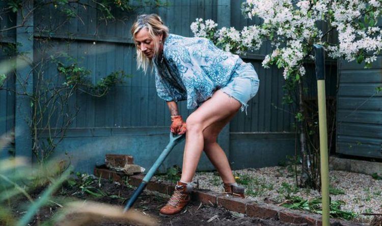 Gardening tips: FIVE laws of gardening gardeners must keep in mind