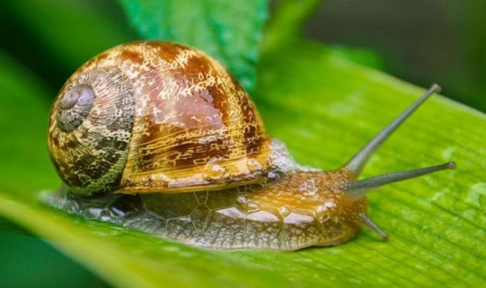 6 foolproof tricks to get rid of slugs in your garden organically