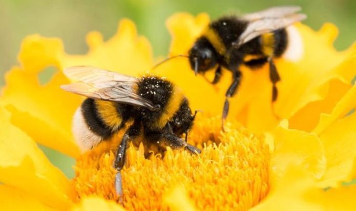 How to help exhausted bees - the truth behind the sugar water claim