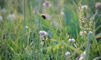 Pollen calendar UK: When is grass pollen season? Full list of pollen types  by month | Express.co.uk