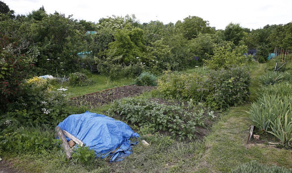 Jeremy Corbyn's allotment in Each Finchley is filled with growing fruits and vegetables