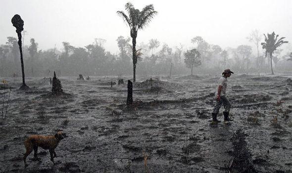 Amazon fires: Amazon rainforest fires
