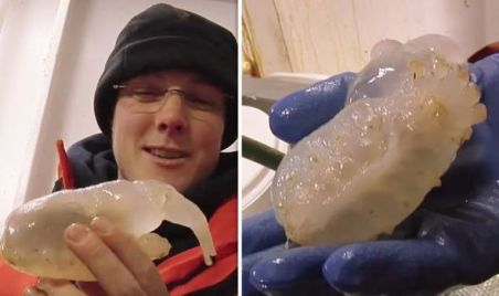 Antarctica scientists were stunned by the creature