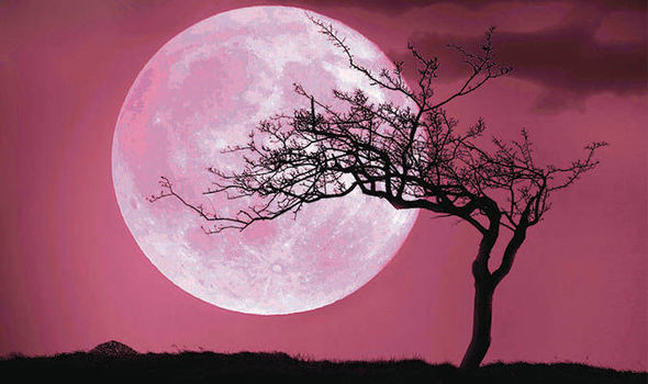 The pink moon rising in the night