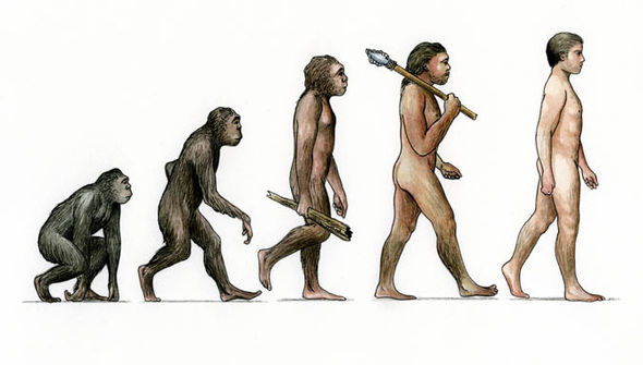 Humans evolving from apes
