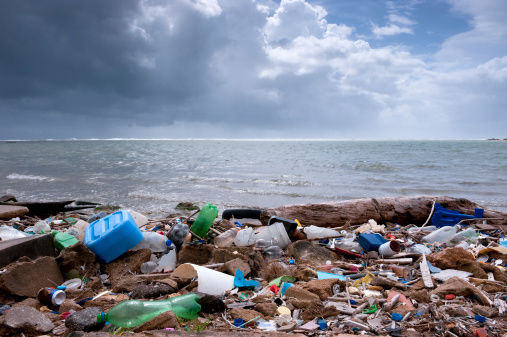 Scientists believe contaminated plastic debris has contributed towards the pollutants