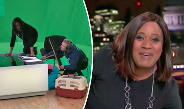 ITV News thrown into chaos as a CAT hides under Charlene White's desk live on air