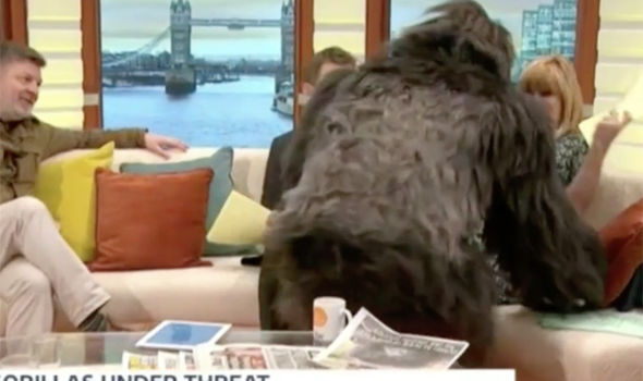 Kate Garraway screams at the gorilla on Good Morning Britain