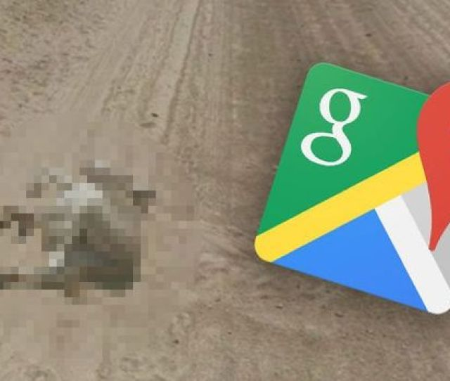 Google Maps The Cameras Cause Quite A Shock For A Donkey