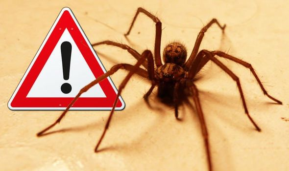 Uk Spiders How To Get Rid Of Spiders In Your Home Express Co Uk