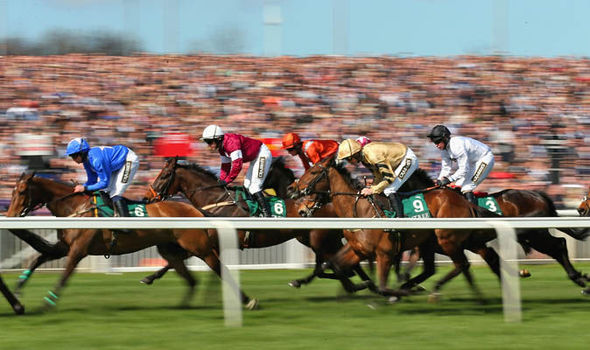 Eleven horses have died in the Grand National since 2000