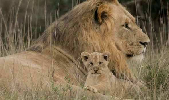 The killing came in South Africa, across the border from where Cecil was slaughtered