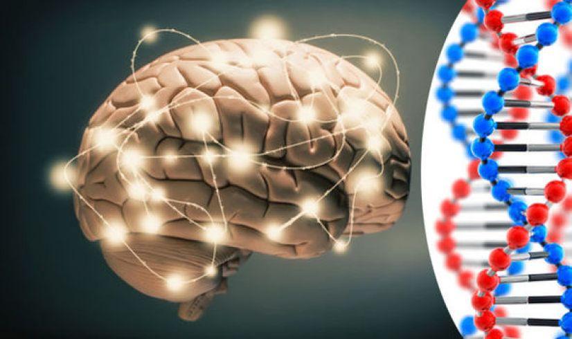 Risultati immagini per genes intelligence