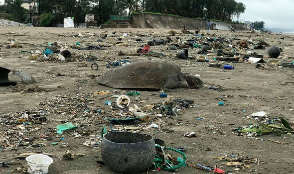 Plastic is said to be harming marine life