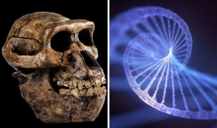 Scientists 'astonishing' human DNA breakthrough after 'mystery species' find