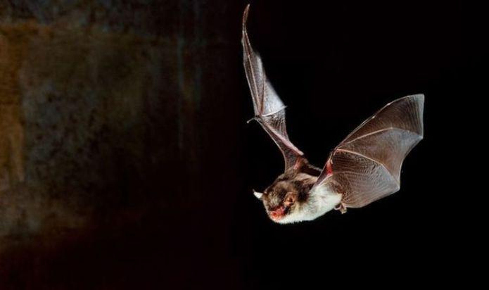 Sixth sense! Study claims humans could develop 'bat-like' echolocation sensing abilities