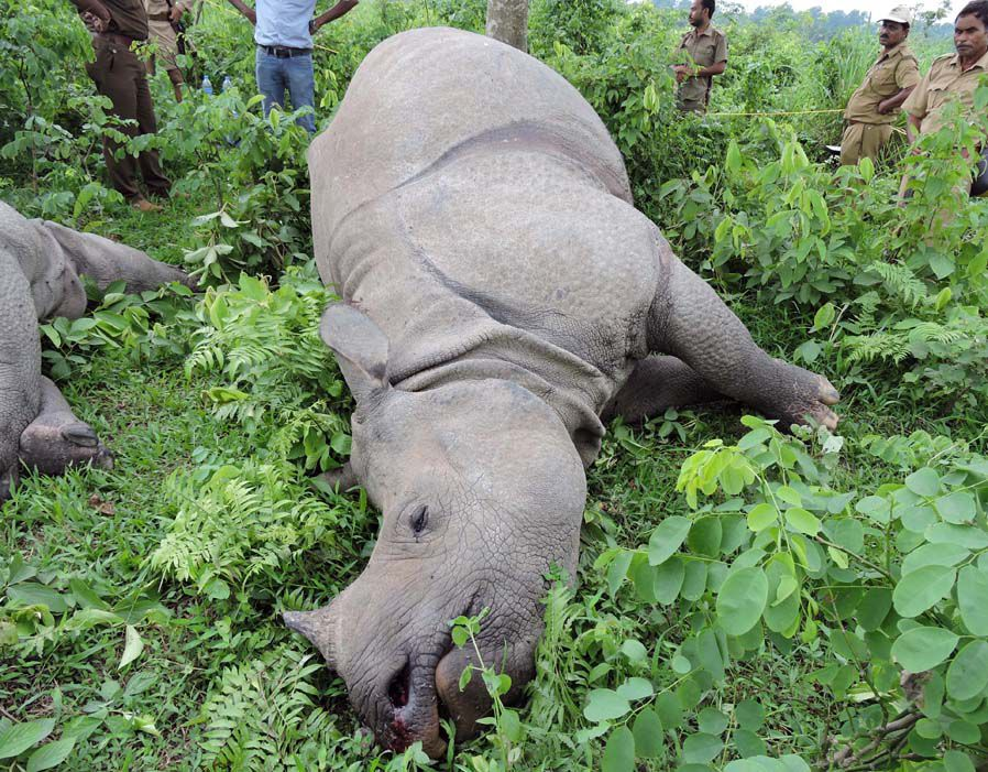 The bodies of a rhino family were found after being struck by lightning