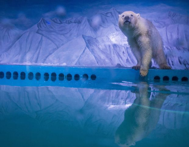 It's not hard to see why this poor polar bear has been named the world's saddest polar bear after being kept in cramped conditions for 300 days in a mall in China