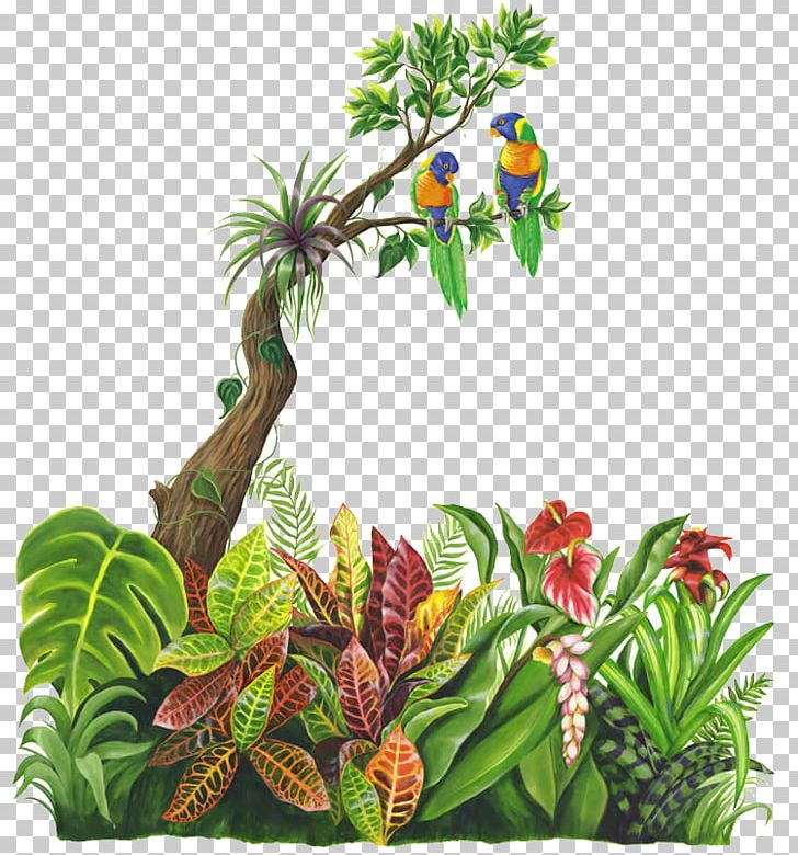 Jungle Tropical Rainforest Png Clipart Child Drawing Flowerpot Forest Fruit Free Png Download