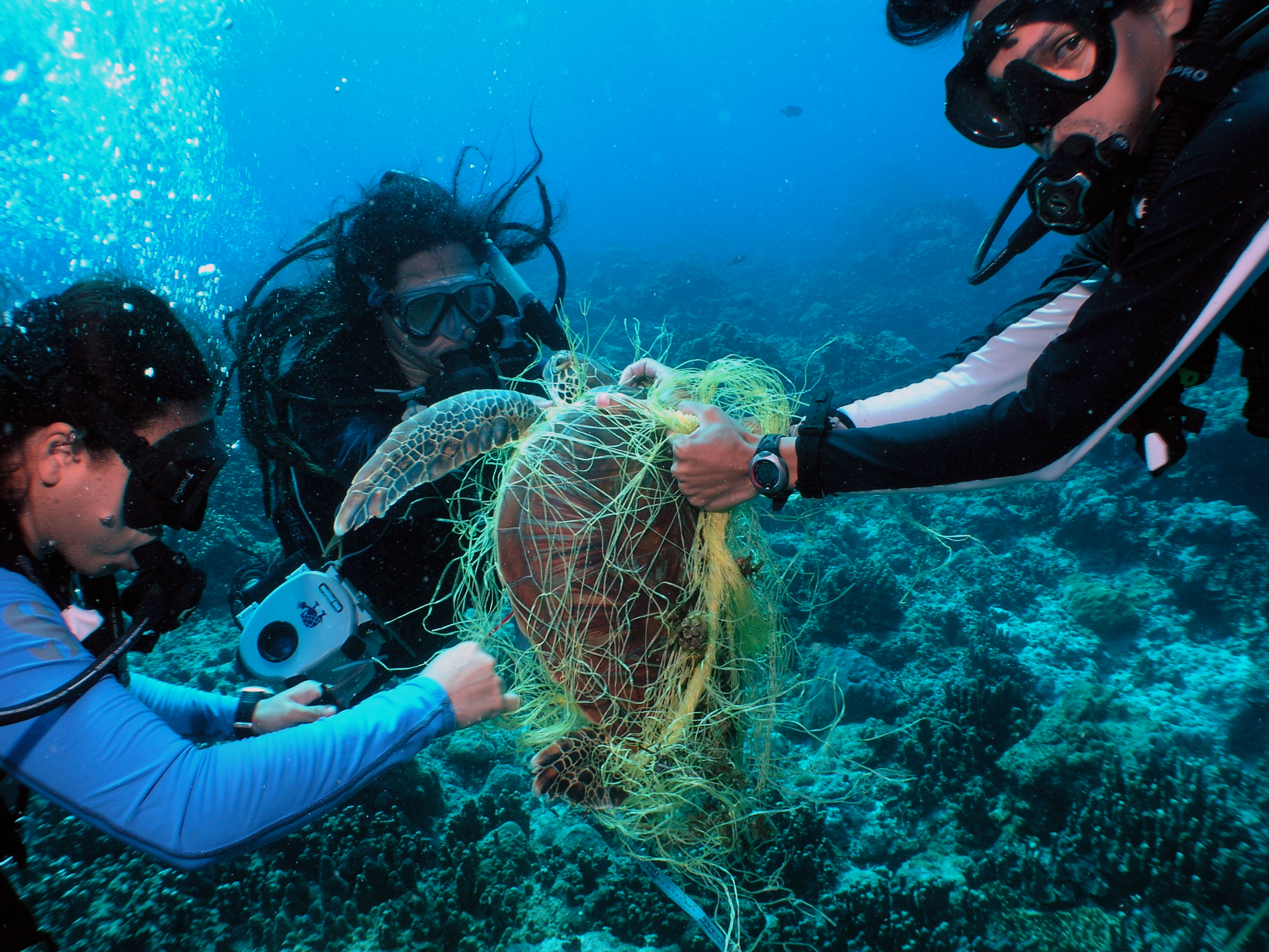 The Ghosts In Our Ocean Lost And Abandoned Fishing Gear