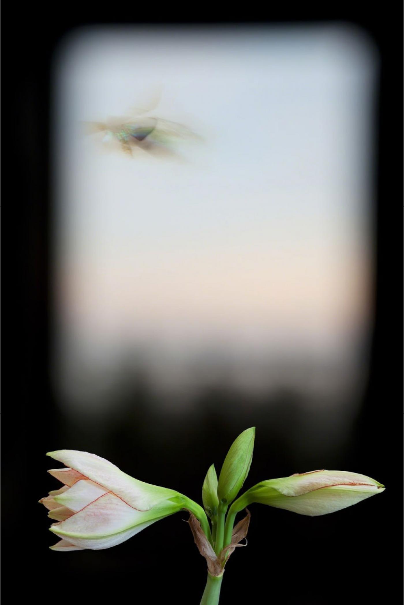 Olivia Parker Evergreen Window 2012