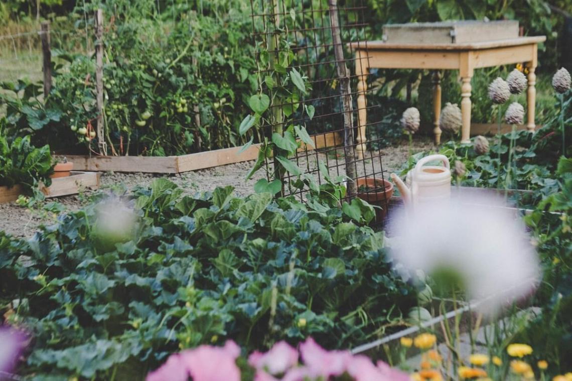 Vegetable Garden Planner Creates A Free Custom Plan