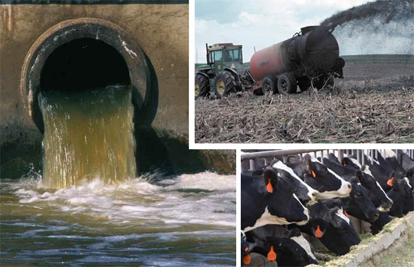 Tyson Water Pollution More Than ExxonMobil